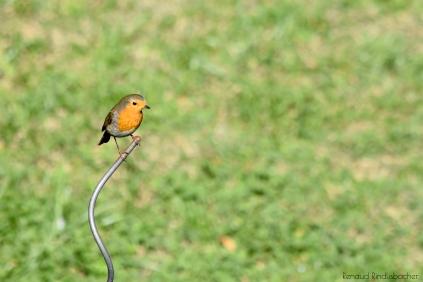 oiseau-001