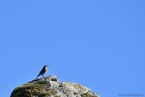 oiseau-002