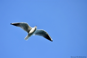 oiseau-005