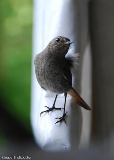 oiseau-012