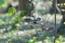 oiseau-014