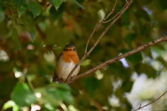 oiseau-016