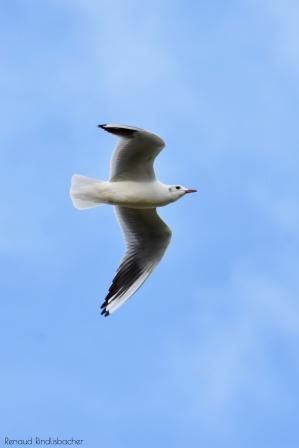 oiseau-018